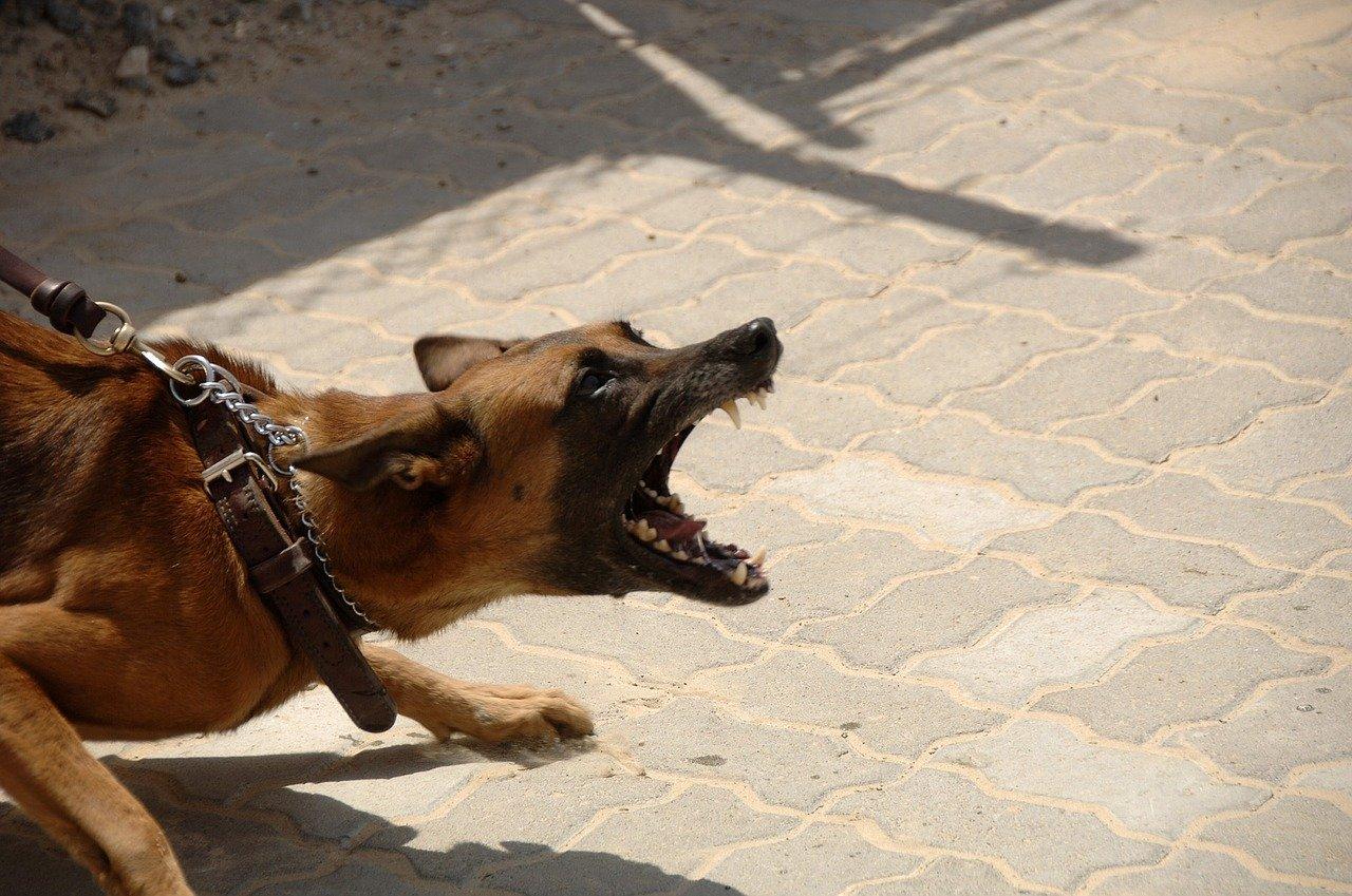 angry dog bark